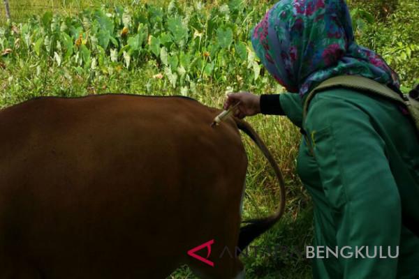 Puluhan ternak di Mukomuko mati akibat ngorok