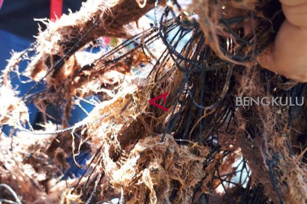 DLH Mukomuko selidiki pembuangan limbah sawit ilegal