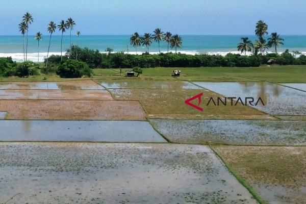Bengkulu Selatan optimalkan pemanfaatan lahan kering