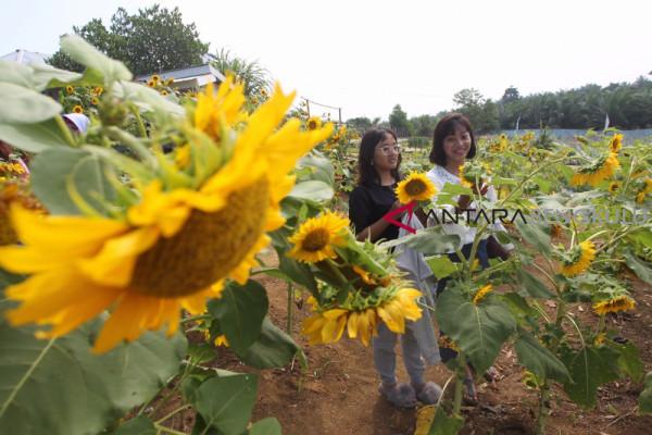 Menengok agrowisata pertanian edukatif di Bengkulu Selatan