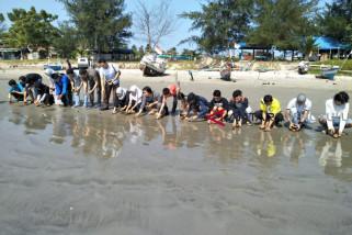 Tukik langka dilepas di pantai Tapak Paderi Bengkulu