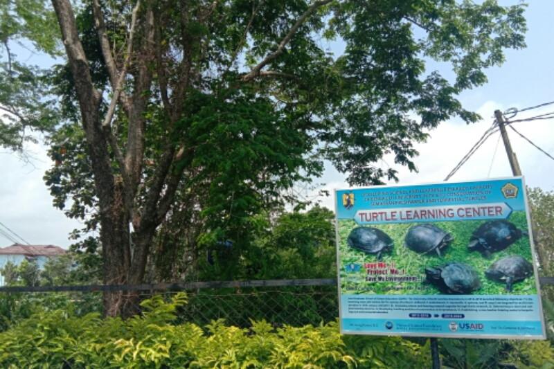 Peneliti sebut populasi kura-kura Sumatera kritis