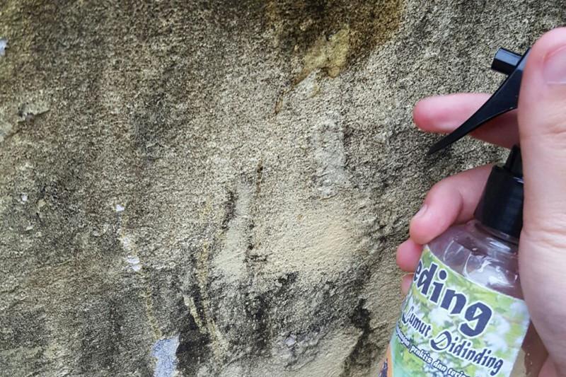 Pelajar Bengkulu Selatan kembangkan cairan herbal anti lumut bangunan