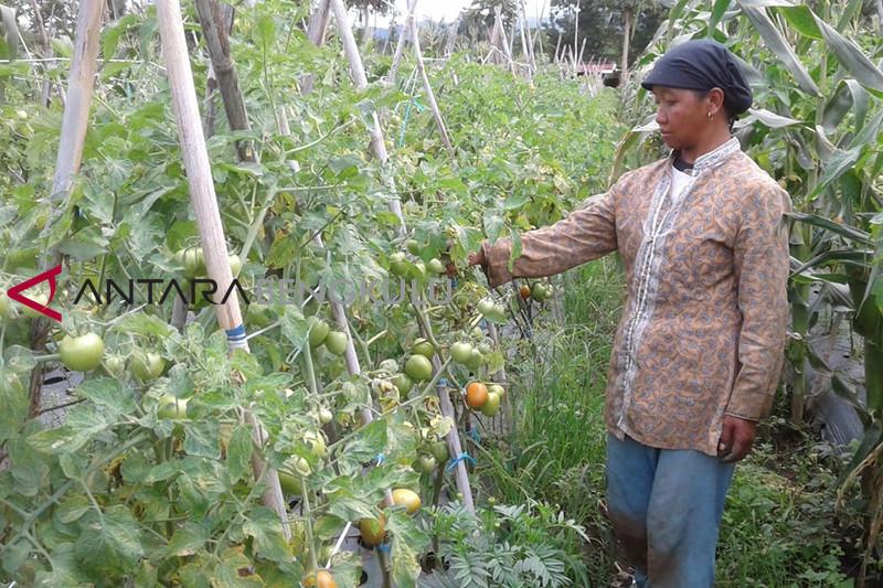 Harga sayuran di Rejang Lebong beranjak naik