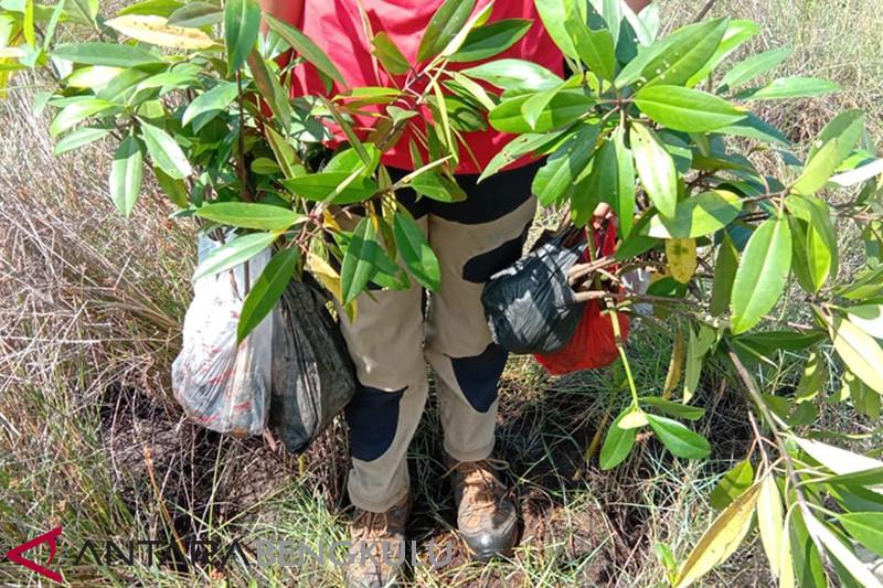 Menjaga kelestarian hutan mangrove di Bengkulu