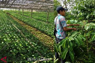 Bengkulu kembangkan destinasi wisata kebun kopi