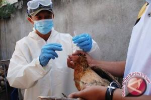 Ribuan Burung Puyuh Mati Mendadak Bukan Karena Flu Burung