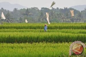 Lahan Pertanian Berkelanjutan Karawang Perlu Diperjelas