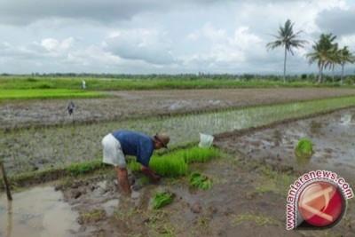 Distan Kabupaten Bekasi Susun Perda Lahan Abadi