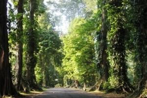 500 Pohon Di Kota Bogor Segera Punya KTP
