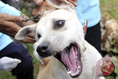 12 Warga Jabar Meninggal Akibat Rabies
