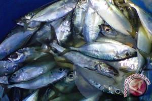 Harga Ikan Laut Di Sukabumi Merangkak Naik