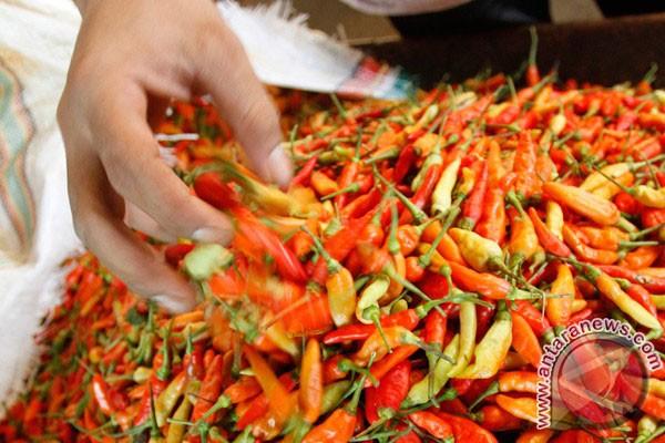 Harga Cabai Rawit Merah Bertahan Di Rp110.000