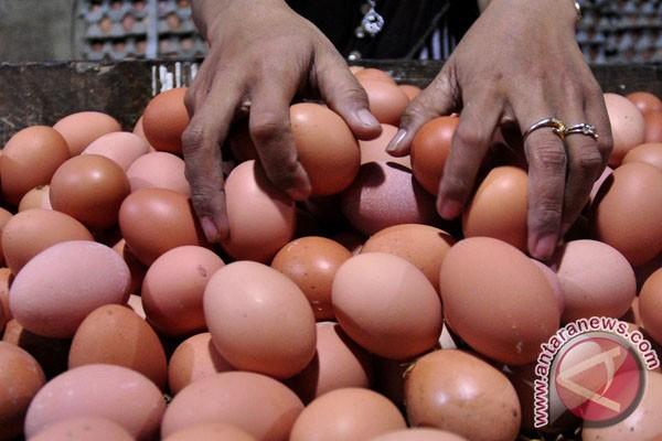 Telur tetas dari Purwakarta diekspor ke Myanmar