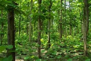 Haroto Pusako Sentul Tawarkan Wisata Lingkungan