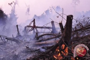 Ada Menteri Dalam Negeri Mundur Gara-gara Kebakaran Hutan