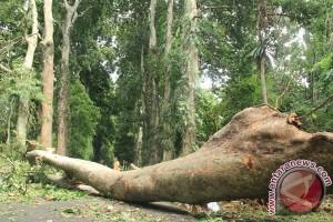 Pemkot Bogor Wacanakan Perda Perlindungan Pohon