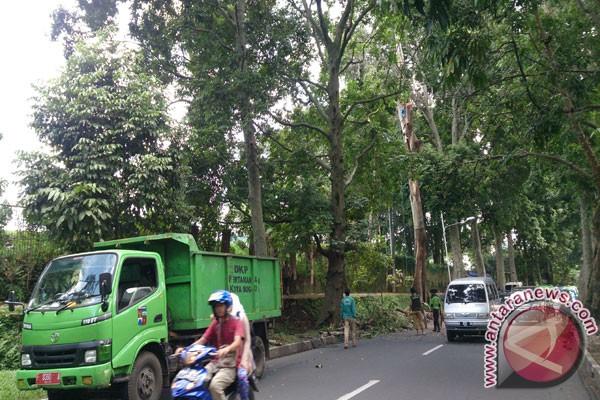 Antisipasi Pohon Tumbang Dan Patah, Pemkot Bogor Lakukan Ini