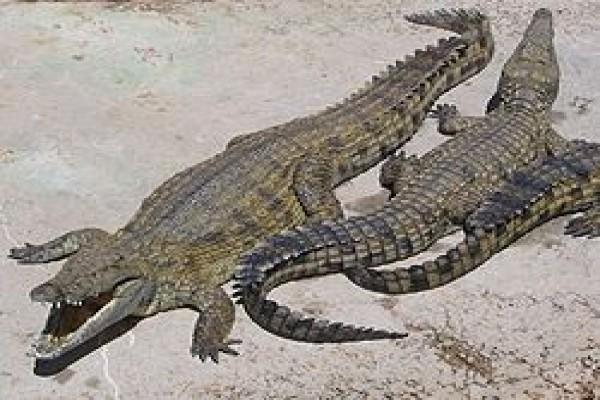 Pemulihan Berbagai Spesies Perlu Penyelarasan