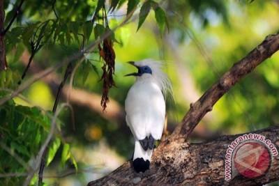 Menjaga Burung Endemis Indonesia Dari Ancaman Punah