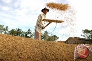 Ini Imbauan Untuk Petani Karawang Hadapi Paceklik