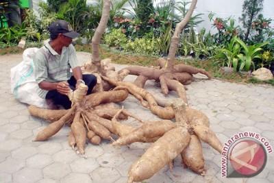Ekonomi Lampung Menguat