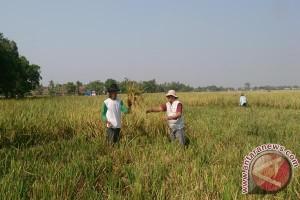 Melindungi Lahan Pertanian Karawang Dengan ''Setengah Hati''