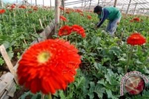 Ketika Mahasiswa Berbisnis Kebun Bunga