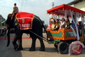 Tulang Belulang Seekor Gajah Sumatera Ditemukan Di Lampung Timur