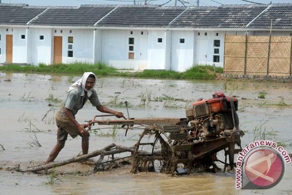 Parah, 127 Hektare Lahan Pertanian Sukabumi Beralih Fungsi