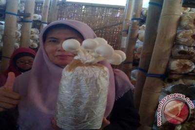 SEAMEO Biotrop Bogor Kembangkan Olahan Jamur Tiram