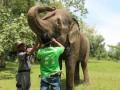 Periksa Kesehatan Gajah