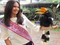 Burung Rangkong Badak TSI