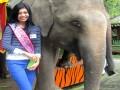 Gajah Sumatera TSI