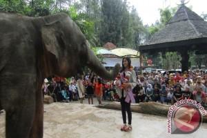 Pengalungan Bunga oleh Gajah TSI