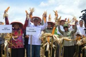 Lampung Panen Perdana Jagung Di Hutan Register-46