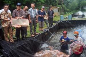 Wow, IPB Panen 3 Ton Ikan Nila Unggulan