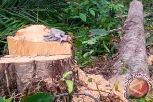 Penebang Pohon Ilegal Di Bogor Akan Dipidanakan