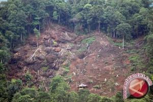 Brazil Janji Pulihkan 12 Juta Hutan Rusak