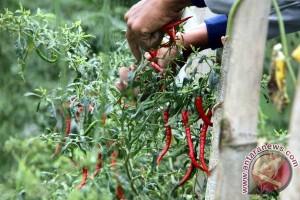Lindungi Petani Cabai-Bawang, Ini Upaya Kementan
