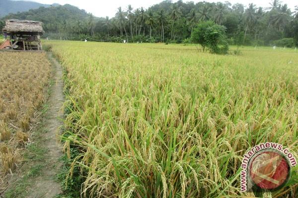 Provinsi Lampung Memperkuat Komitmen Mewujudkan Ketahanan Pangan