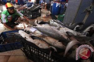 Ada Penjualan Ikan Hiu Di Karawang?
