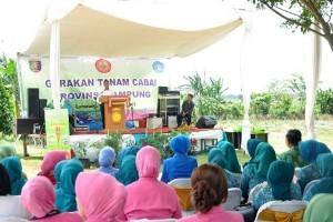 Organisasi Wanita Agar Ikut Memproduski Cabai