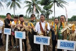Menteri Pertanian Panen Raya Jagung Di Lampung