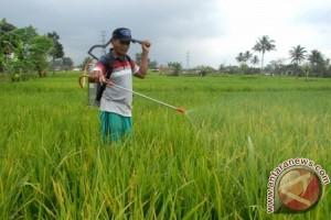 Lahan Pertanian Sukabumi Terserang Hama