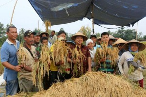 Produksi Petani Lampung Surplus, Peringkat Keempat Nasional