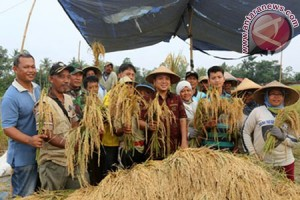 Padi Lampung Surplus