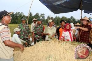 Pemprov Lampung Menargetkan Produksi 4,6 Juta Ton Gabah