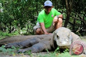 Komodo Jalannya Lambat, Pariwisatanya Melesat