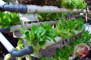 Pemuda Sukabumi Kembangkan Sistem Pertanian Hydroponik